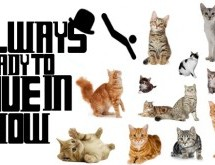 The Always Ready To Dive In Show Episode 21 – Cats, Cats Everywhere