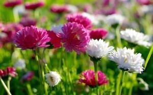 spring-2013.480.300.s