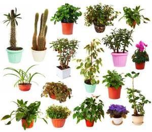 houseplant expert.com