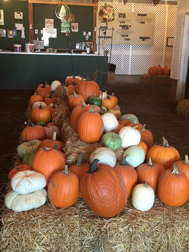 Daniken Tree Farm has plenty of pumpkins to choose from. Source: Kelsey Neier