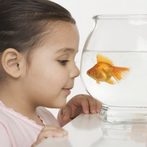Young girl watching a fishbowl --- Image by © Royalty-Free/Corbis