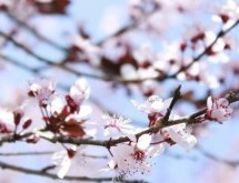 April Events Bring May Flowers