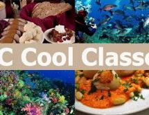 Cool GC Classes